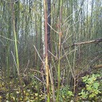 ash dieback and crowddsource