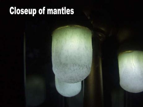 Mantles.jpg