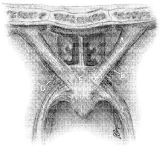 US 20090128553.jpg