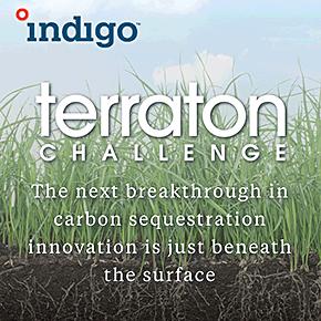 Terraton Challenge