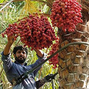 UAE FoodTech Challenge