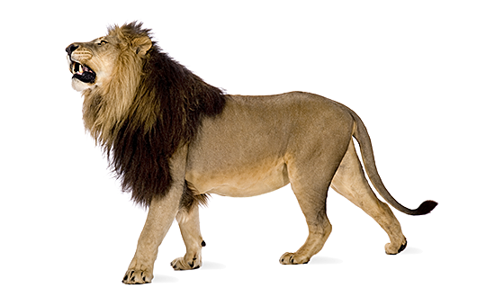 Lion Png Images Download: Solve Your Innovation Challenges At IdeaConnection.com