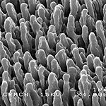 Black Silicon Kills Bacteria with a Bed of Nails