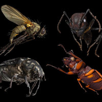 Insect Scanner Captures Digital Insect Specimens