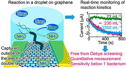 Graphene Biosensor Detects Stomach Cancer Bacteria