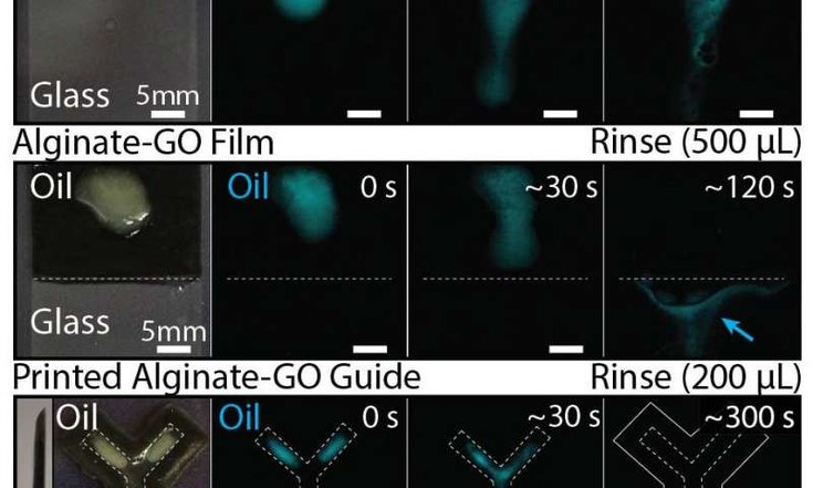 Graphene-Reinforced Hydrogel is Stiffer and Smarter