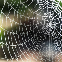 Non-Toxic Synthetic Spider Silk