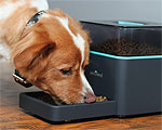 Pintofeed is a Smarter Pet Feeder