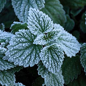 Reducing Frost Formation by Mimicking Leaf Surfaces