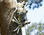 Photo of Treebot